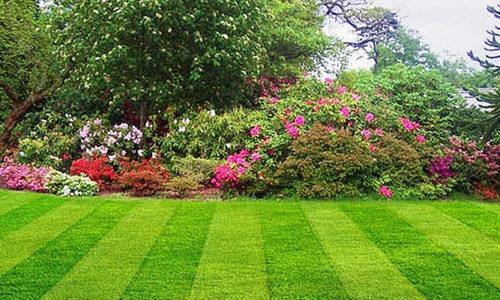 Landscape Gardening Company | Testimonial